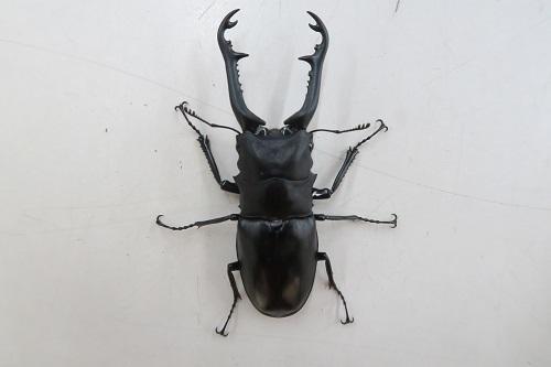 20200321虫 (6)