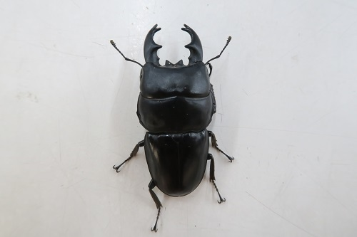 20200321虫 (5)