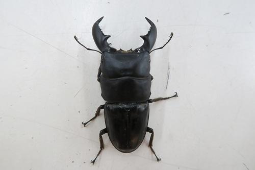 20200321虫 (3)