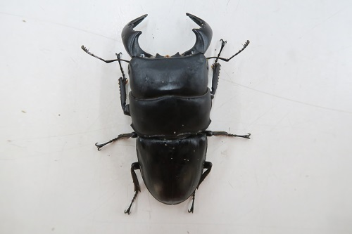 20200321虫 (4)