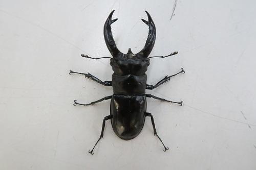 20200321虫 (1)