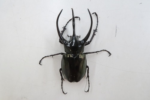 20200321虫 (2)