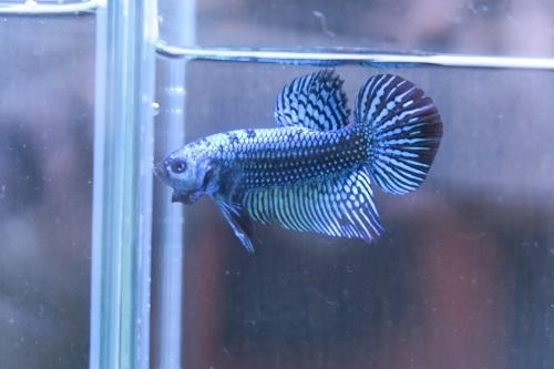 20200328魚 (6)