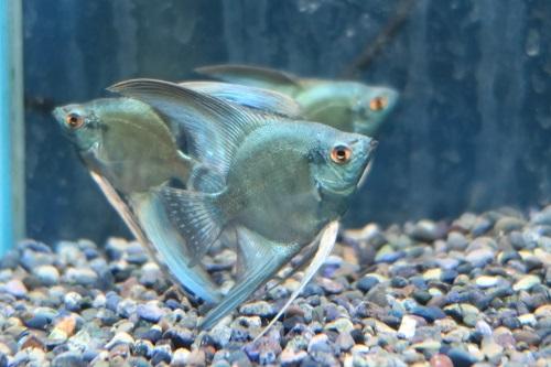 20200328魚 (3)