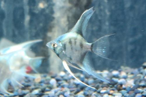 20200328魚 (2)