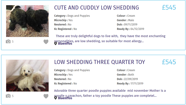 1イギリス 犬 インターネット販売