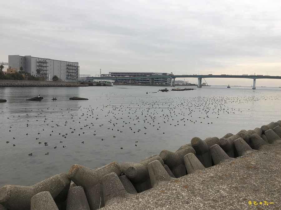 KUROGAMO-6b.jpg