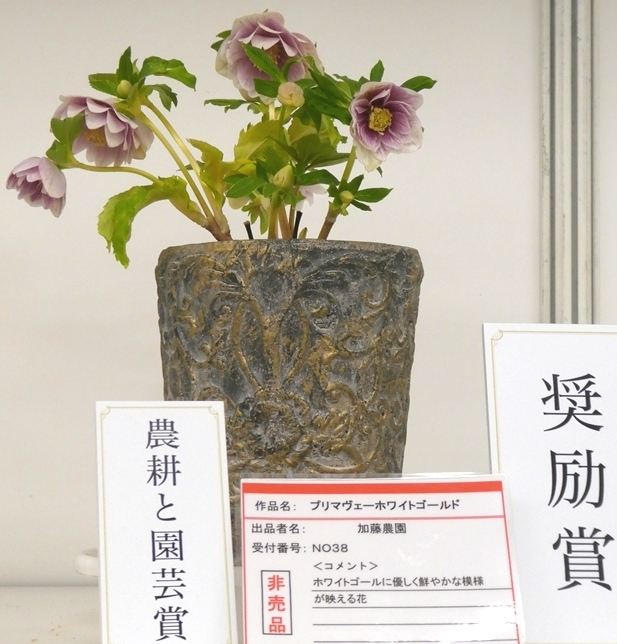 kuriten20_con_25.jpg