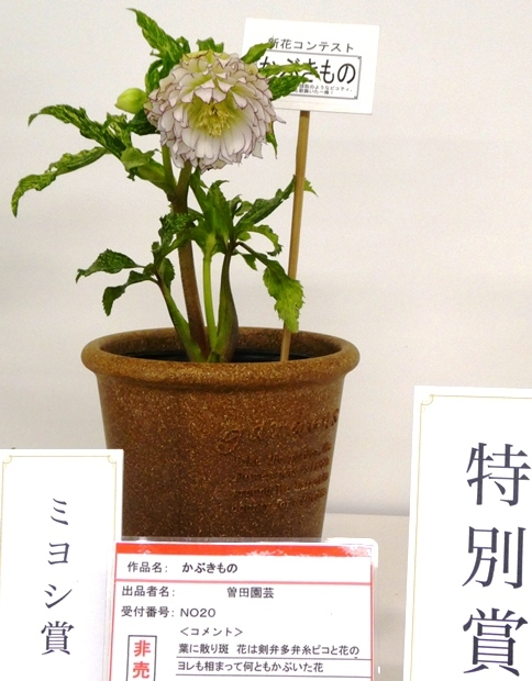 kuriten20_con_34.jpg