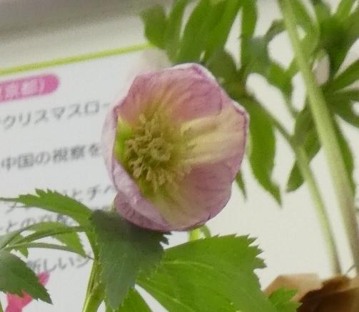 kuriten20_fumi1.jpg