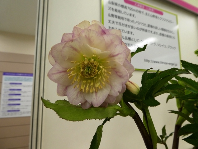 kuriten20_hiro_bo.jpg