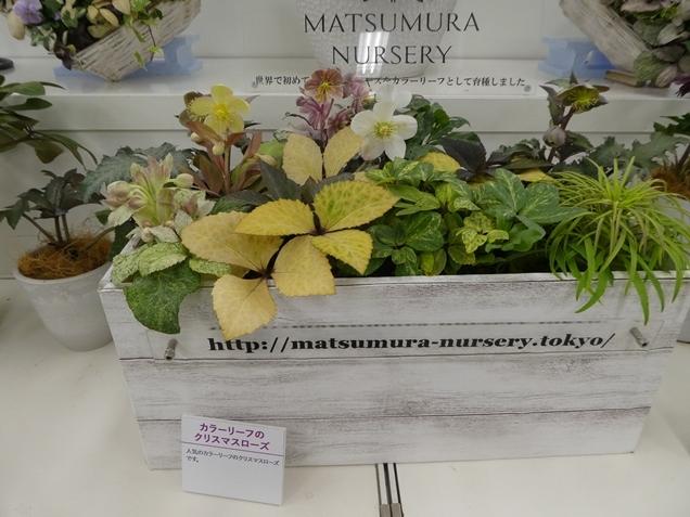 kuriten20_matsumura1.jpg
