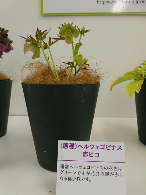 kuriten20_matsuura1.jpg