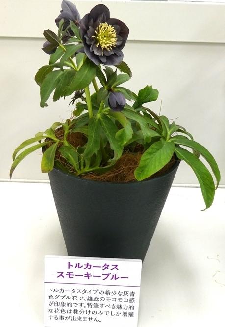 kuriten20_matsuura2.jpg