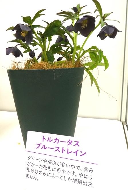 kuriten20_matsuura3.jpg