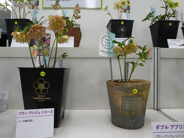 kuriten20_takasho.jpg