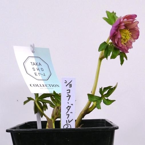 kuriten20_takasho3.jpg