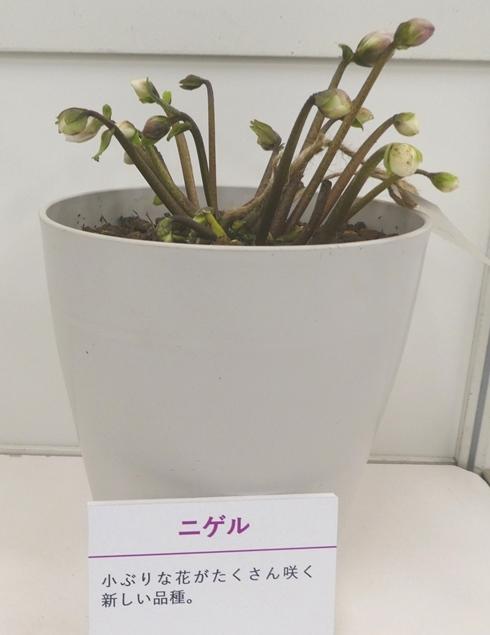 kuriten20_yamato.jpg