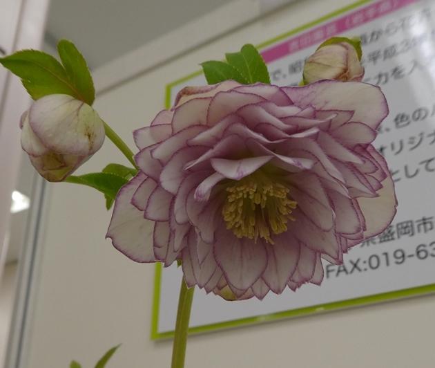 kuriten20_yoshida2.jpg