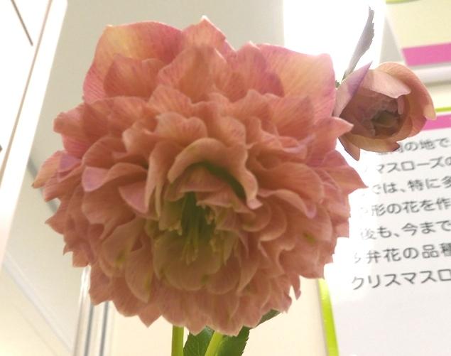 kuriten20_yoshida3.jpg