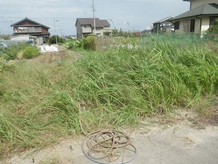 草刈り5_19_09_28