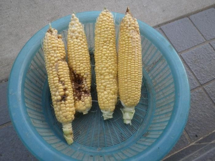 収穫3_19_10_06