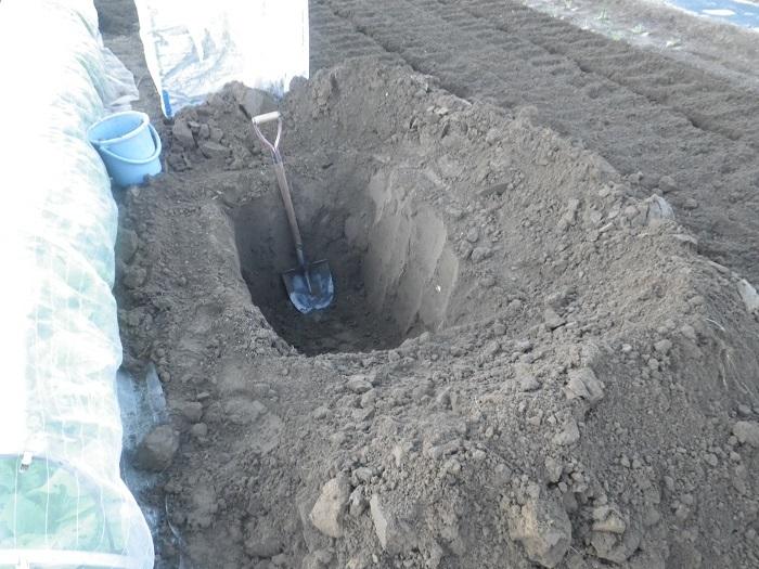 穴掘り2_19_11_04