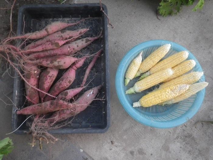収穫2_19_11_04