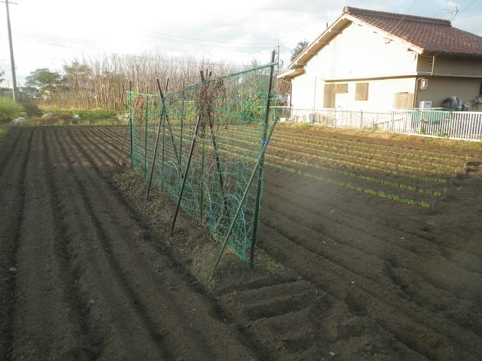 隣の畑2_19_11_13