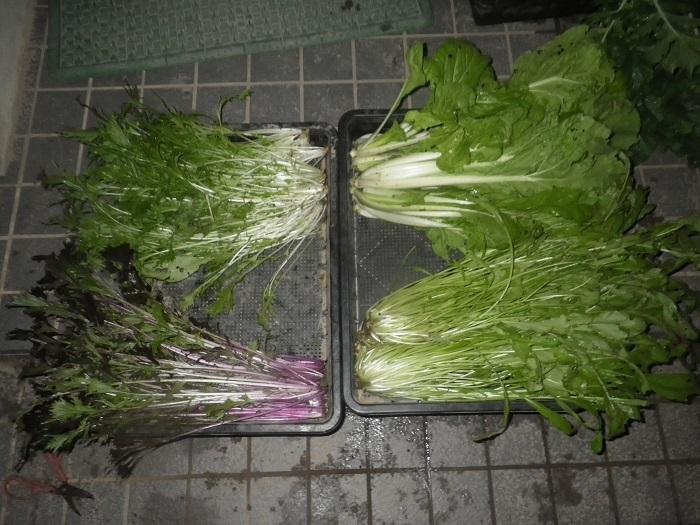収穫2_19_11_18
