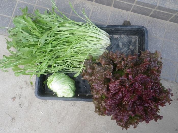 収穫4_19_12_09