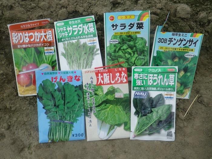 小物野菜4_19_12_14