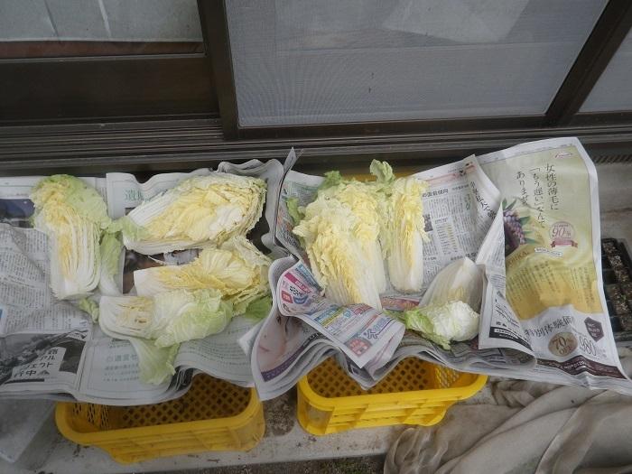 白菜19_12_22