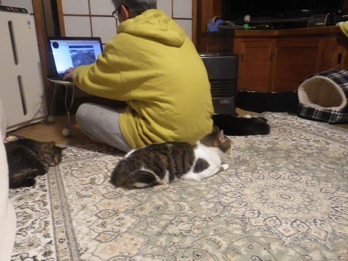 猫2_19_12_22