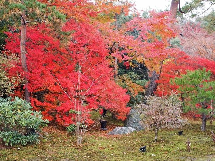 京都2_19_11_30