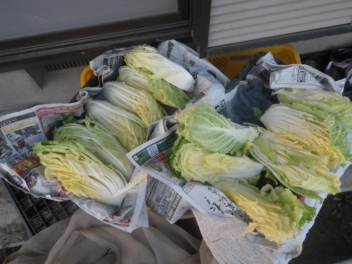 白菜2_20_01_11