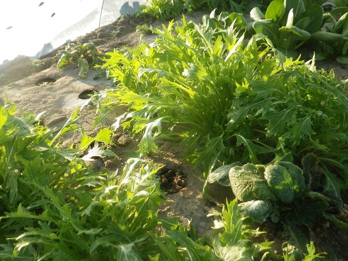 小物野菜2_20_02_27