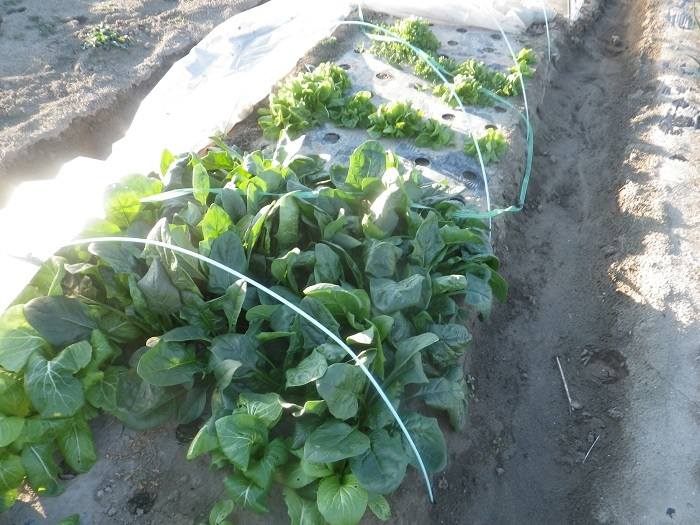 小物野菜2_20_02_28