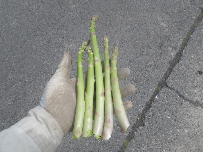 収穫2_20_03_28