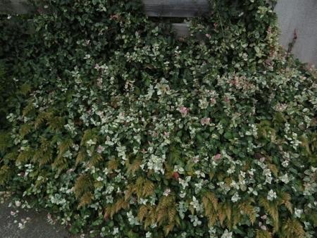 牡丹の花の種子 2019-10-01 023