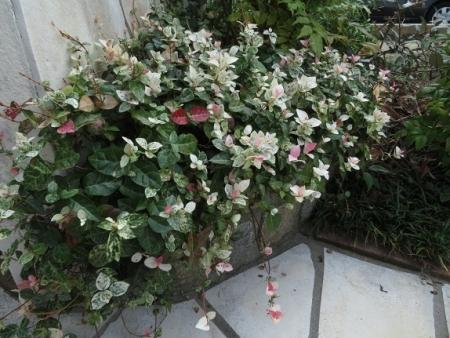 花の名前は 2019-10-02 001