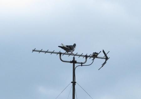 鳩二羽飛ぶ 2019-10-02 005