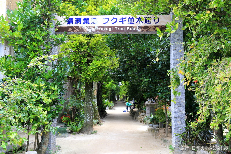 トトロの森 備瀬のフクギ並木 沖縄