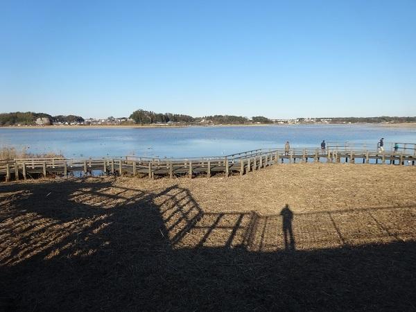 200101手賀沼お散歩 (1)