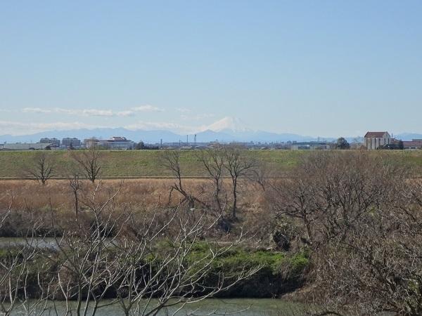 200201野田櫻木神社 (5)