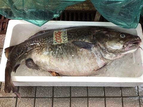 13八食鱈