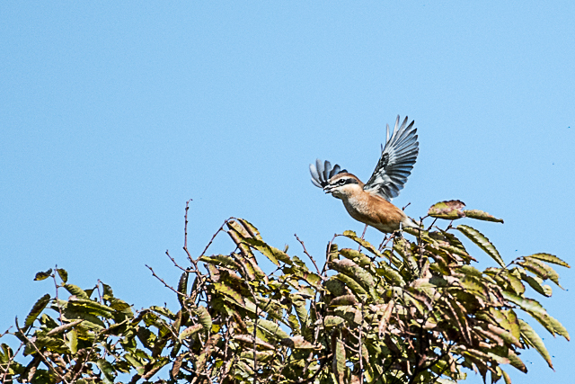野鳥 (2 - 17)
