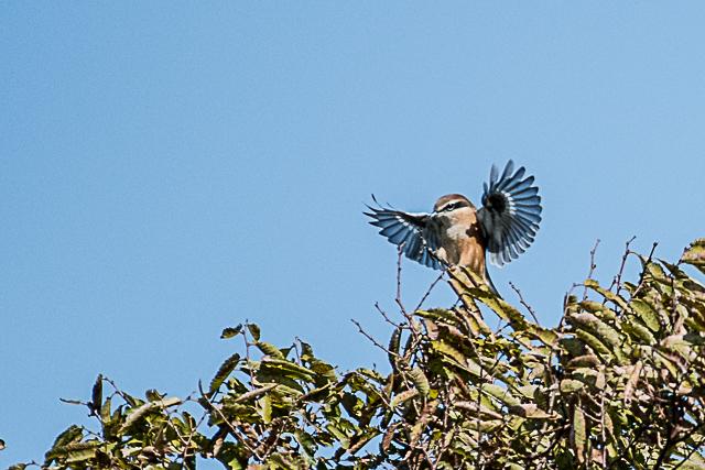 野鳥 (3 - 17)