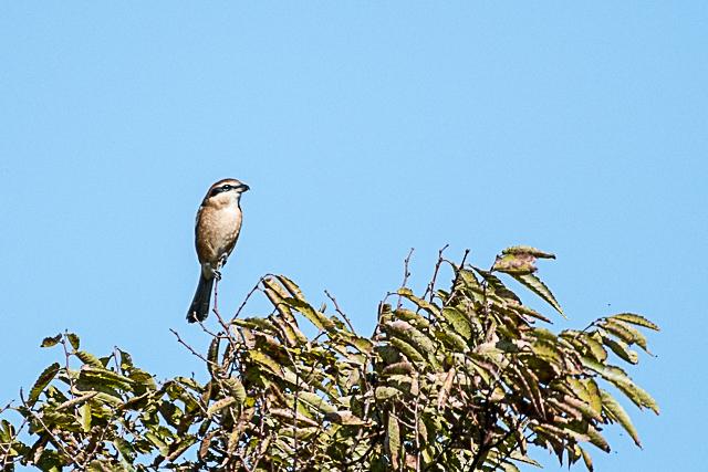 野鳥 (7 - 17)