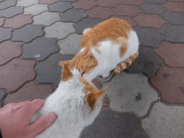 猫25,26